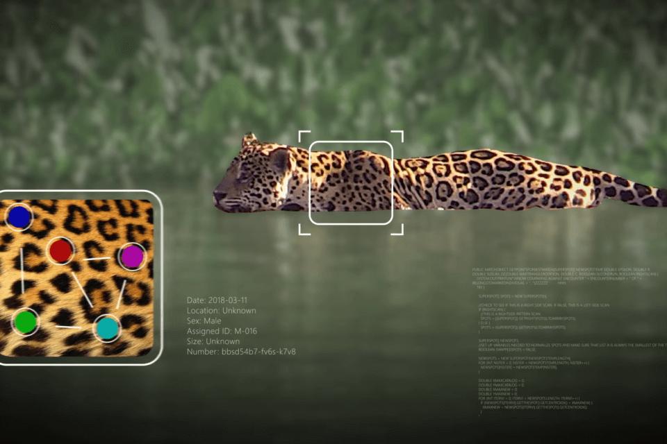 NP: Destacar en la manada: Wild Me utiliza la IA para revolucionar la identificación de animales