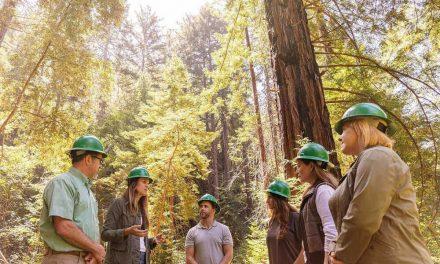 NP: HP se asocia con WWF para el cuidado, recuperación y mantenimiento de los bosques