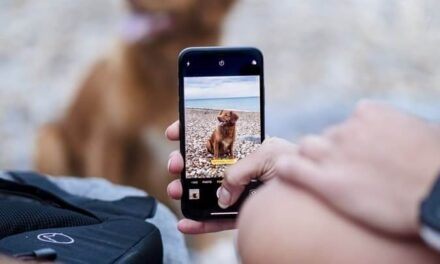 Batalla en Internet: Perros contra Gatos ¿quién gana en las redes sociales?